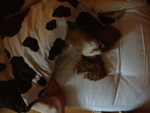Chichi sover vanligt men inte så normalt ;)