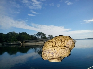 Hjärna på semester
