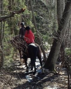 Hästpromenad utmed sjön