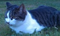 Systers katt, inte Schrödingers