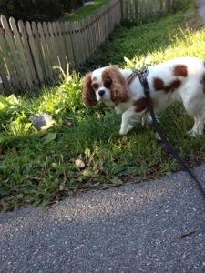 Avslutning med 3 km hundpromenad